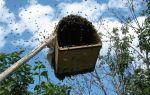 Инвентарь, используемый при роении пчелиных семей