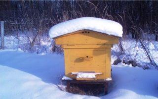 Зимовка пчел в этом году