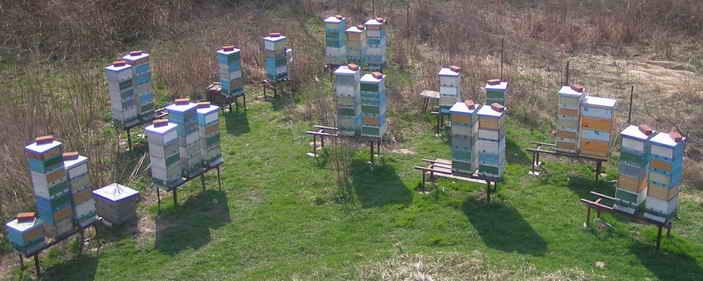 Для тех пчеловодов, которым нет возможности вывозить пчел в поле