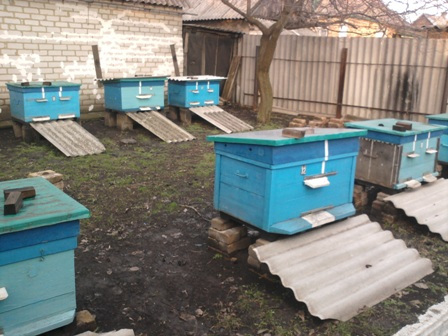 Выставка и облет пчел