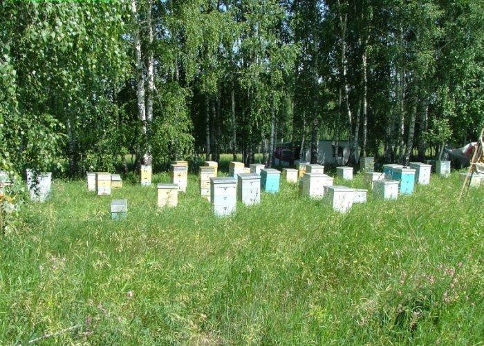 Жизнь пчелиной семьи в течении года