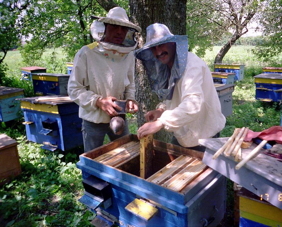 Как покупать пчёл